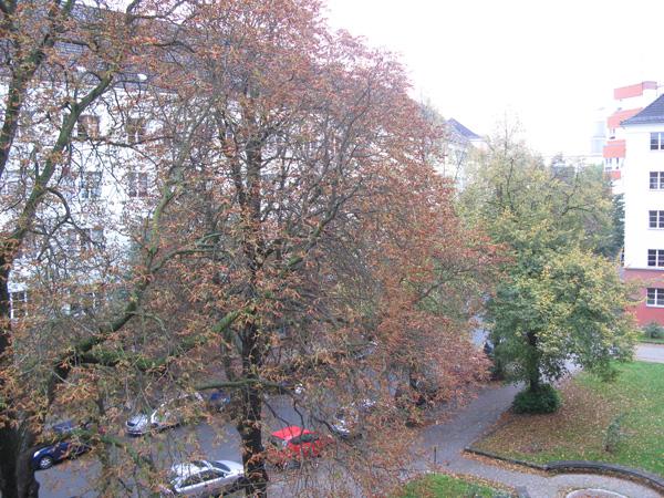 Día de otoño en Berlín desde mi ventana - Foto: Amir Valle